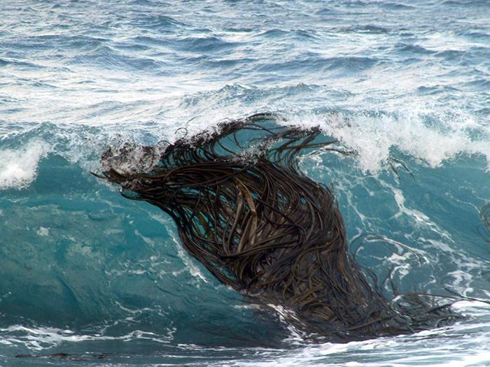 kelp tales 2