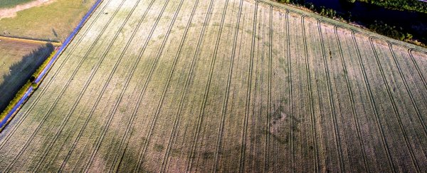 An ancient mystery henge has appeared in 'once in a lifetime' discovery in Ireland