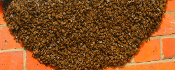 80,000 angry bees attacked a woman for trying to get to her car in California