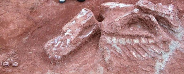 Unique bone discovery shows dinosaurs grew gigantic way earlier than we thought