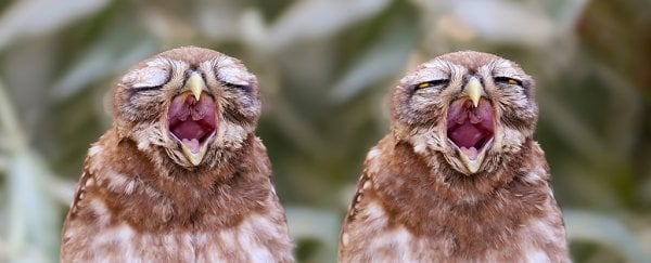This article on the science of yawning will probably make you yawn