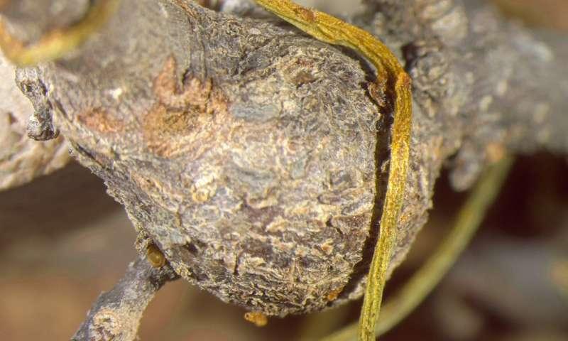 1 parasiticlov