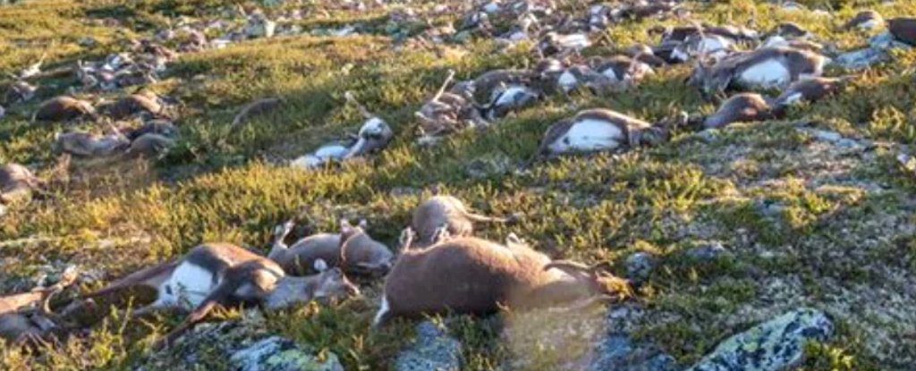 More Than 300 Reindeer Were Struck by Lightning in The Same Spot, And It Changed The Landscape