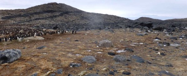 A mass grave of hundreds of mummified penguins has been found in Antarctica