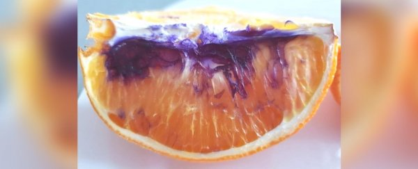 We finally know why that orange in Australia bizarrely turned purple