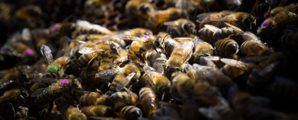 The world's #1 weed killer could also be killing bees, new evidence suggests