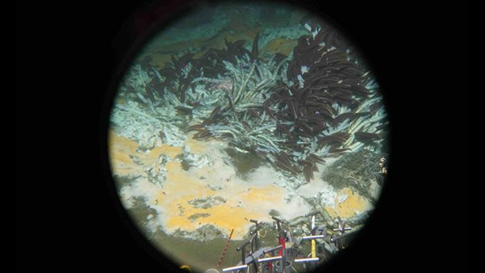 deep sea microbes 2
