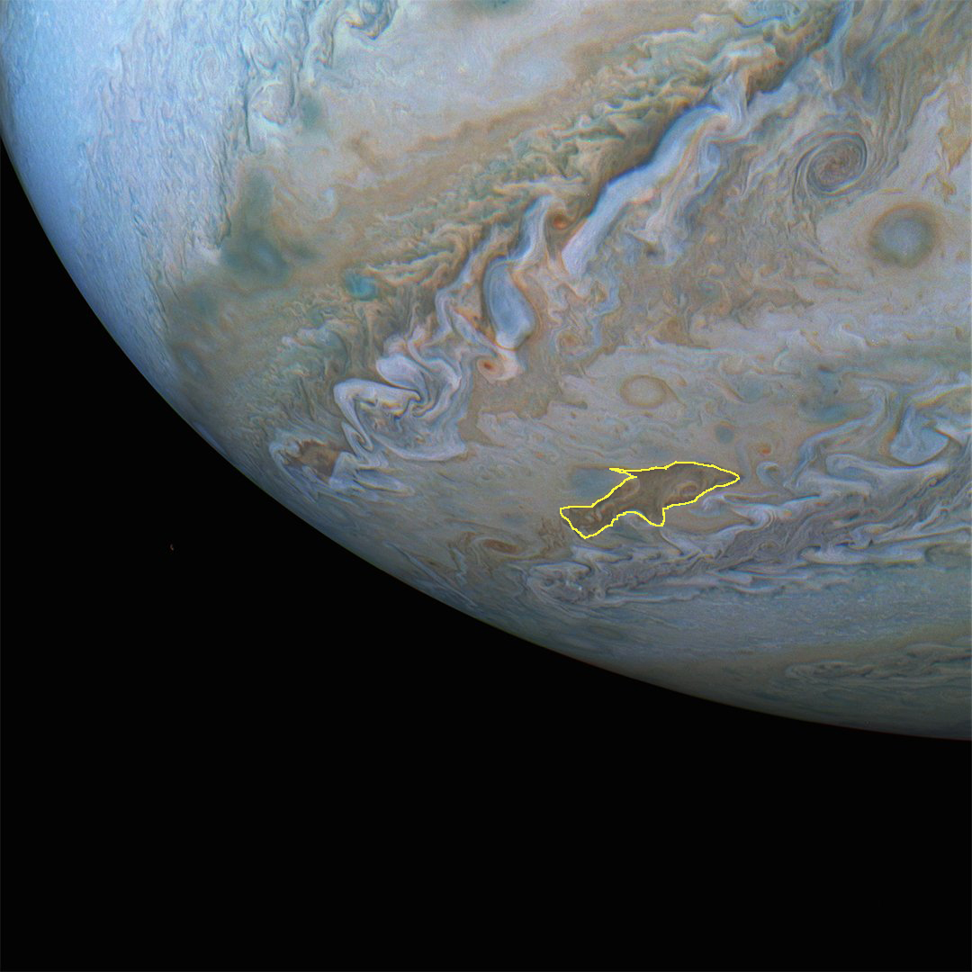 dolphin highlighted jupiter pic