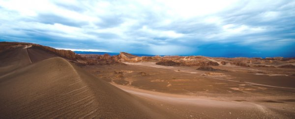 When it rains in the driest desert on Earth, it literally brings death, not life