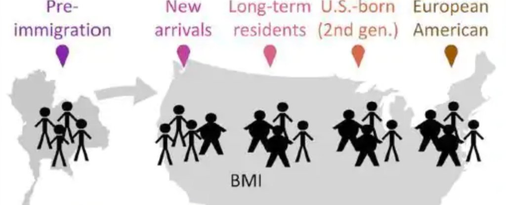 Immigrants Arrive in America With Diverse Gut Bacteria, But That Changes Almost Immediately