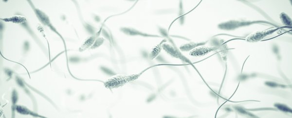 Something is causing male infertility in one of the most important life forms on Earth