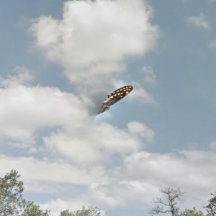 016 ufo google street view butterfly florida 3