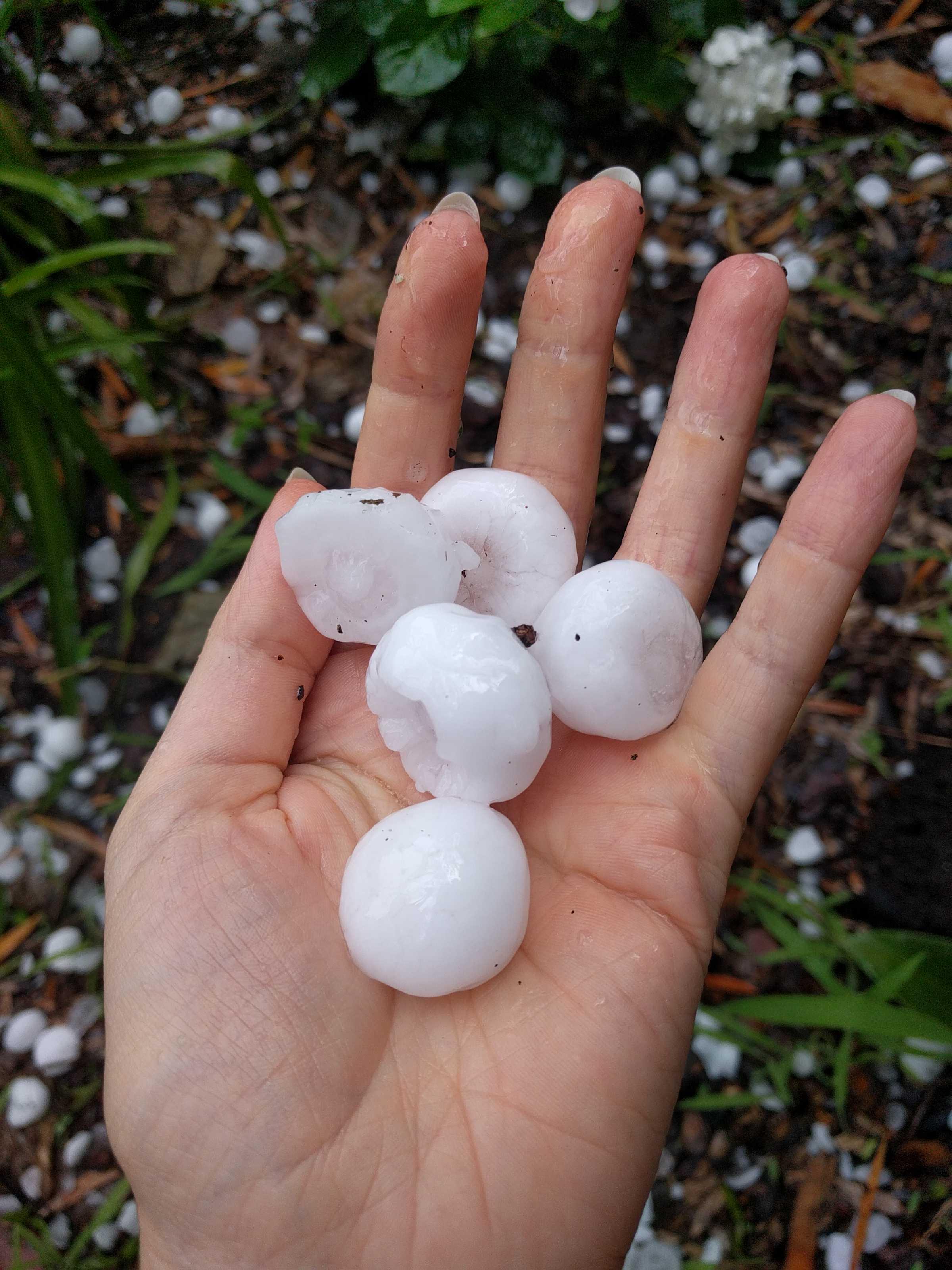 sydney hailstones