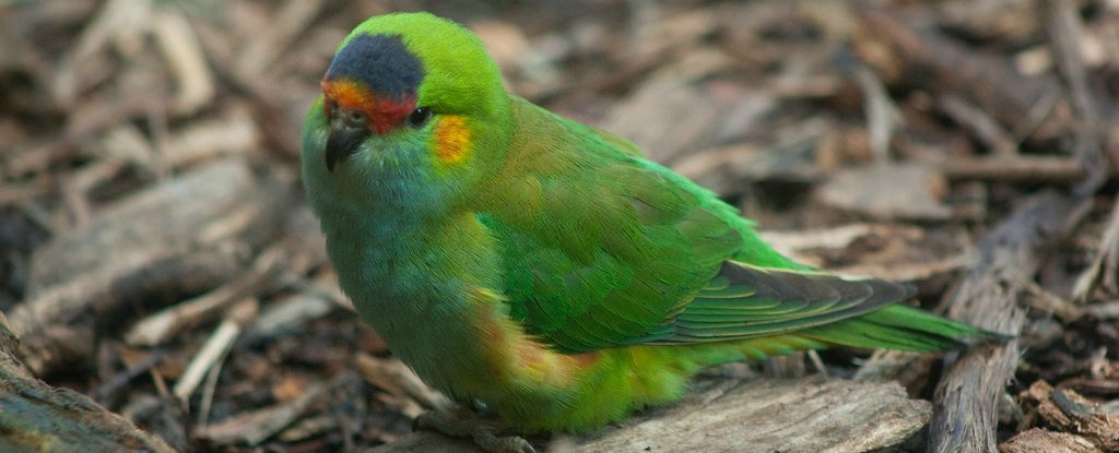 Australia Sent Hundreds of Rare Birds to a German Zoo That Might Not Actually Be a Zoo