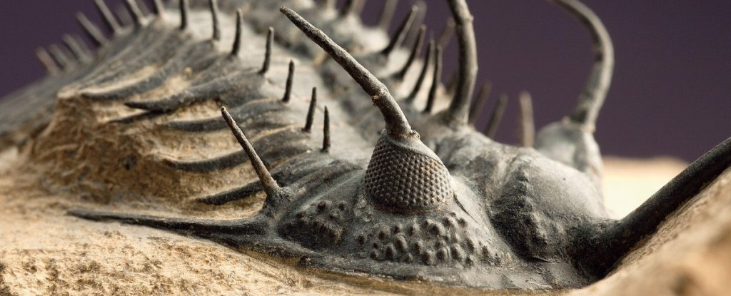 Finally, We Know What Killed Sea Life in The Deadliest Mass Extinction in History