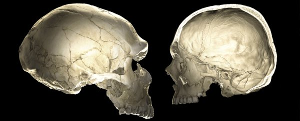 Your Neanderthal genes could be affecting the shape of your brain