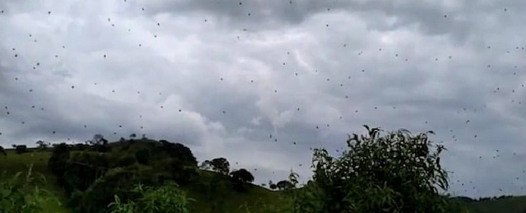 Don't Look Up: Intense Video Shows The Sky 'Raining Spiders' in Brazil