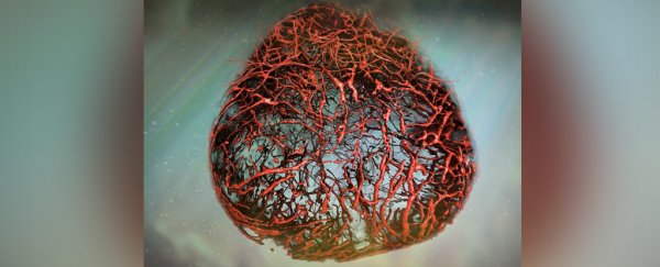 Scientists can now grow perfect human blood vessels in the lab