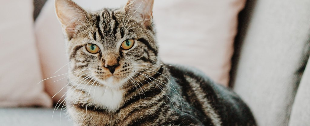 If You Find Cats Antisocial, It's More Likely You Being a Jerk, According to Science