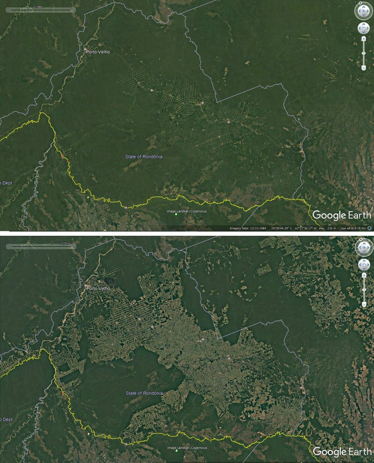 Deforestation around roads in Rondonia, Brazil, 1984-2016. (Google Earth)