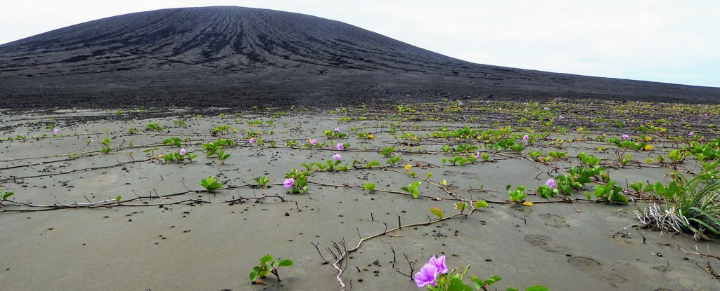 4 Years Ago, This Stunning Island Didn't Exist. Now, It's Teeming With Life