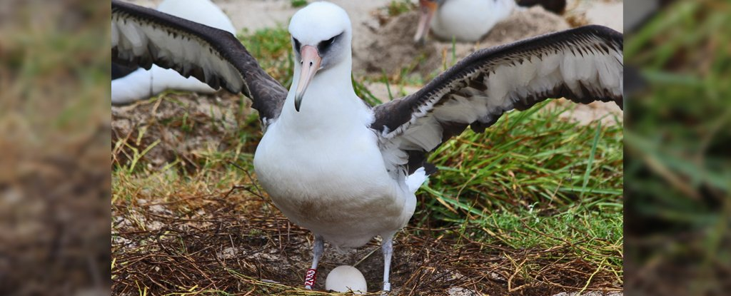 The World's Oldest Known Bird Is Almost 70, But Don't Let That Stop Her