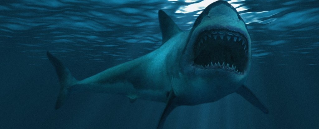The Creature That Killed Off The Giant Megalodon Might Still Live in Our Oceans Today