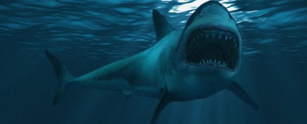 The Creature That Killed Off The Giant Megalodon Might Still