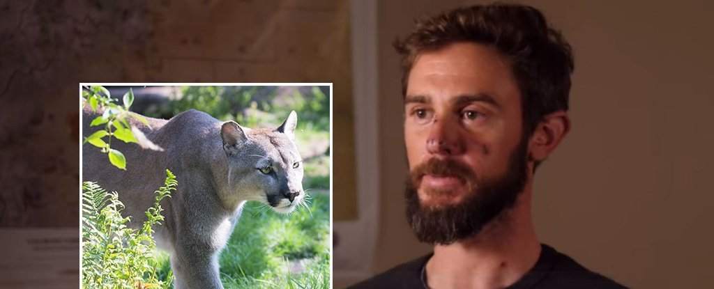 This Trail Runner Fought an Attacking Mountain Lion With His Bare Hands. He Survived