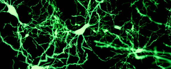 Scientists discover signs of new neurons developing even in adult brains as old as 87