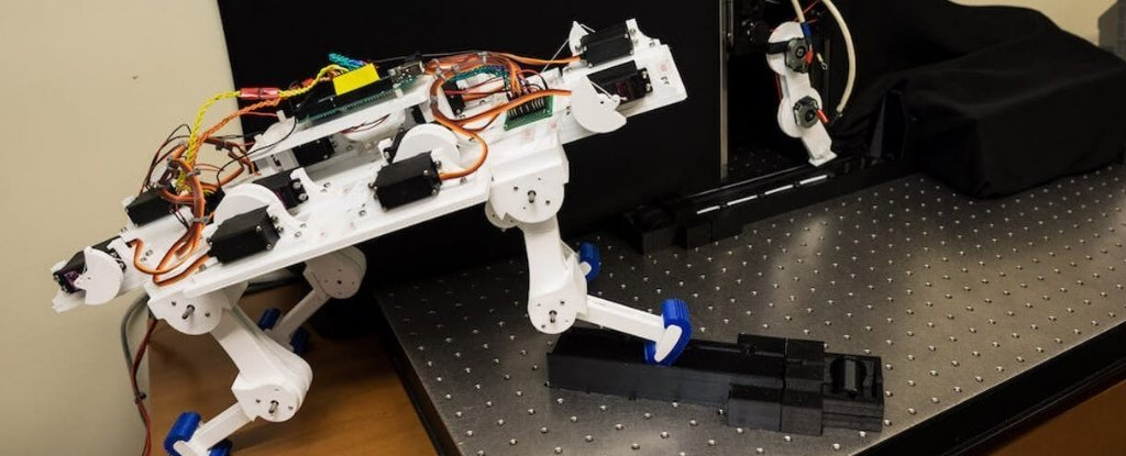 A Robot Leg Learned to Walk by Itself Without Programming, in a Scarily Short Time