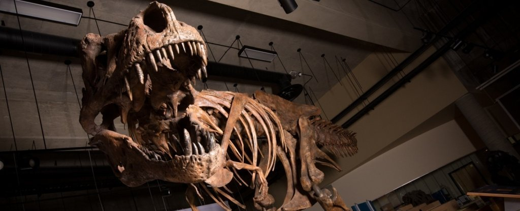 Palaeontologists in Canada Discover The Biggest T. Rex Yet, And It's Epic