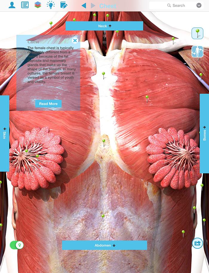 female chest muscle anatomy screenshot 1