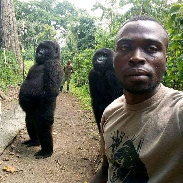 gorilla selfie virl