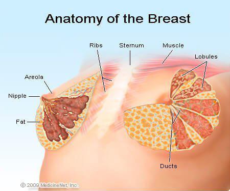 medicinenet breast image crop