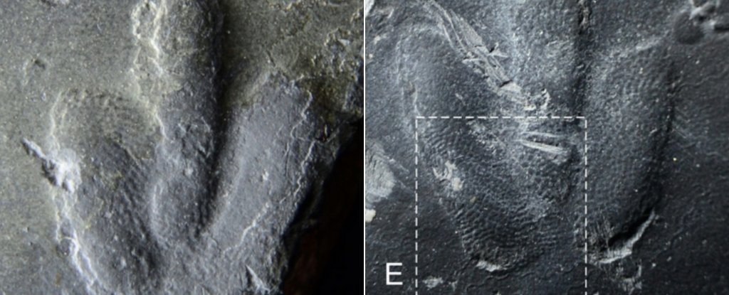 Scientists Find Perfectly Preserved Dinosaur 'Fingerprints' Like Nothing Seen Before