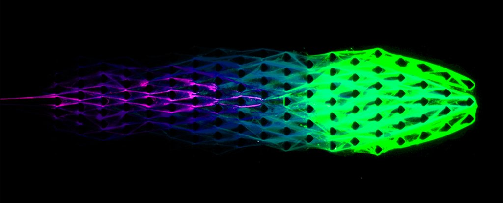 Cornell Engineers Create a Robotic Material That Displays 3 of The Key Traits For Life
