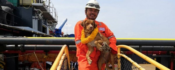 Oil rig workers rescue a dog found swimming in the ocean miles from the coast