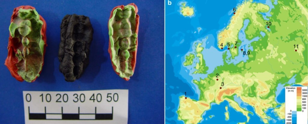 This Gum Has Held The DNA of The Ancient Humans Who Chewed It For 10,000 Years