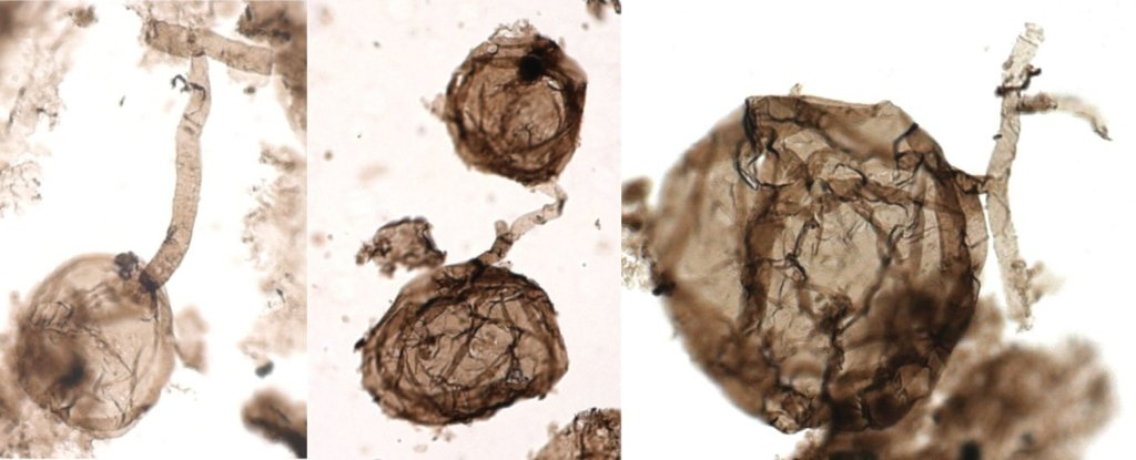 Scientists Have Discovered The Oldest Fossils of Multicellular Life on Land