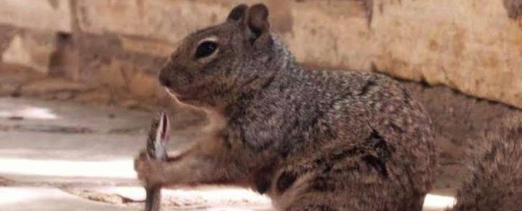 Viral Photos Show a Squirrel Biting a Snake in Texas. Don't Mess With Squirrels