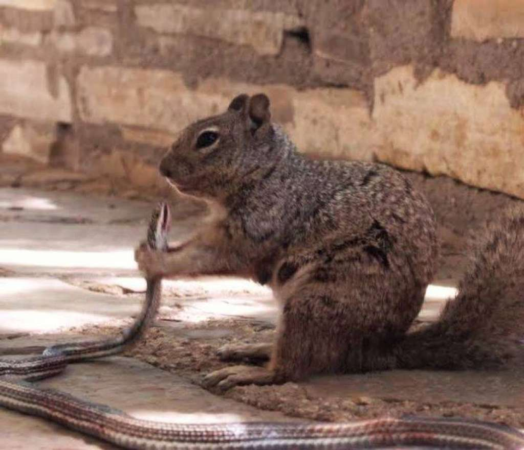 squirrel eating snake part 1
