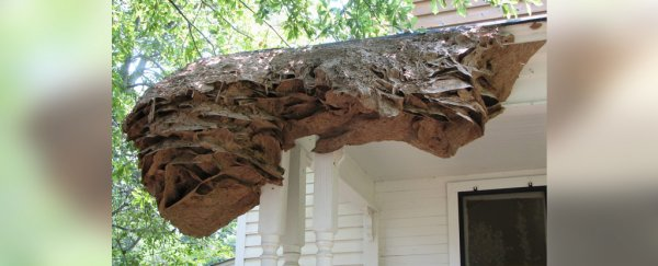 Massive Wasp 'Super Nests' Are Appearing in Alabama, Leaving Pest