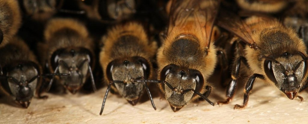 Experiment Shows Bees Can Understand A Symbolic Language For Mathematics