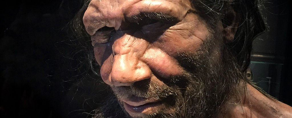 Who Are The Neanderthals?