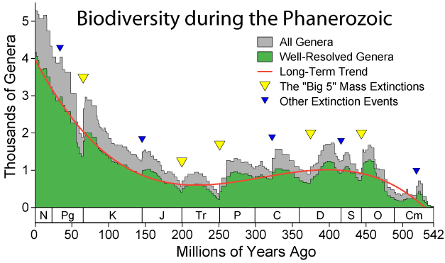 Changes in biodiversity during the Phanerozoic http enwikipediaorg wiki Phanerozoic