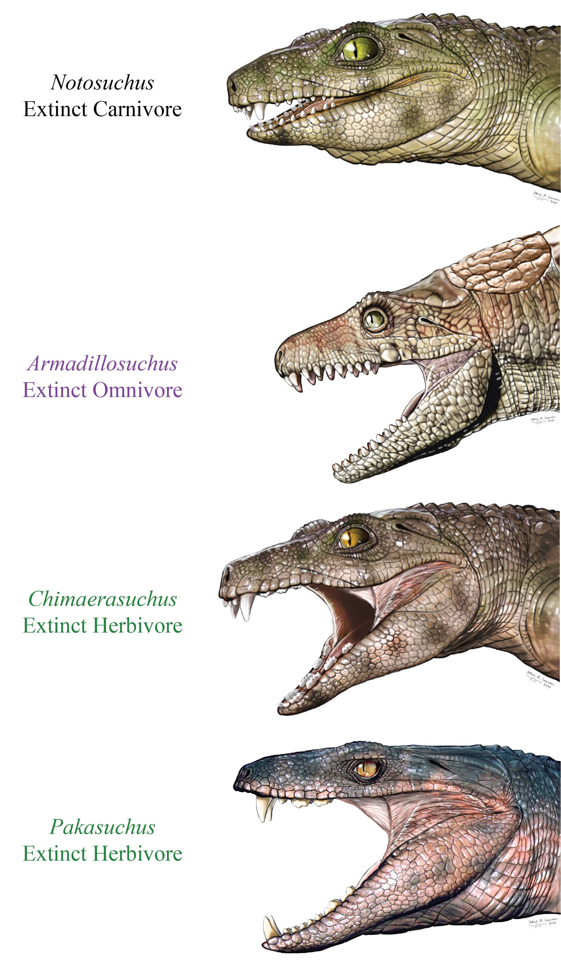 Crocodyliform life reconstructions Credit Jorge Gonzalez