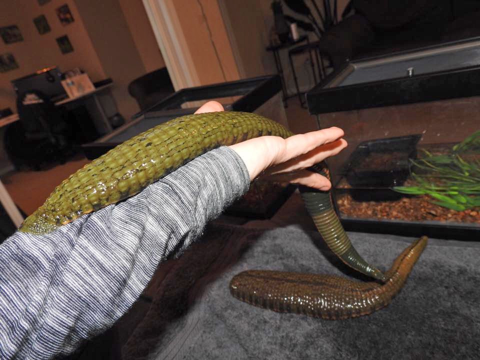 People Are Keeping Parasitic Leeches as Pets, And Letting