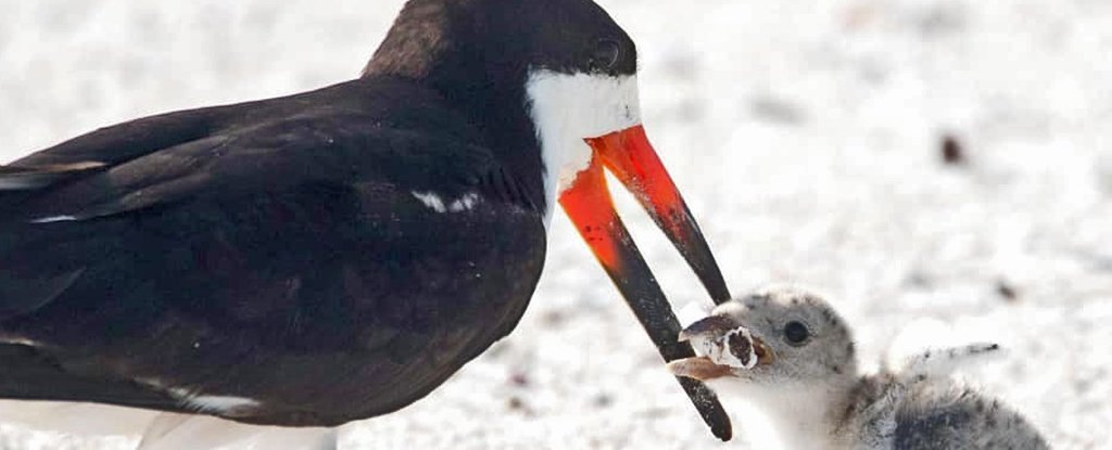 Heartbreaking Photo Shows a Bird Feeding Its Baby a Cigarette Butt