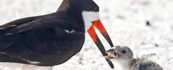 Heartbreaking Photo Shows a Bird Feeding Its Baby a